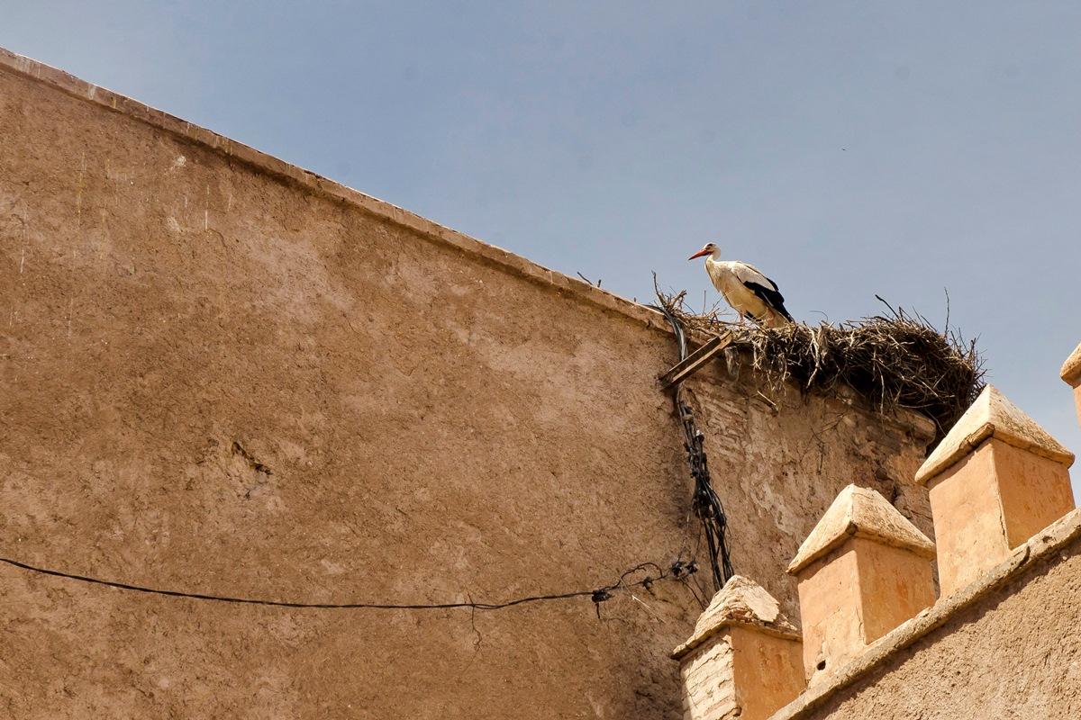 10_Maroko_DSC_4443