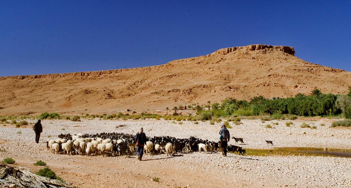 11_Maroko_DSC_6557