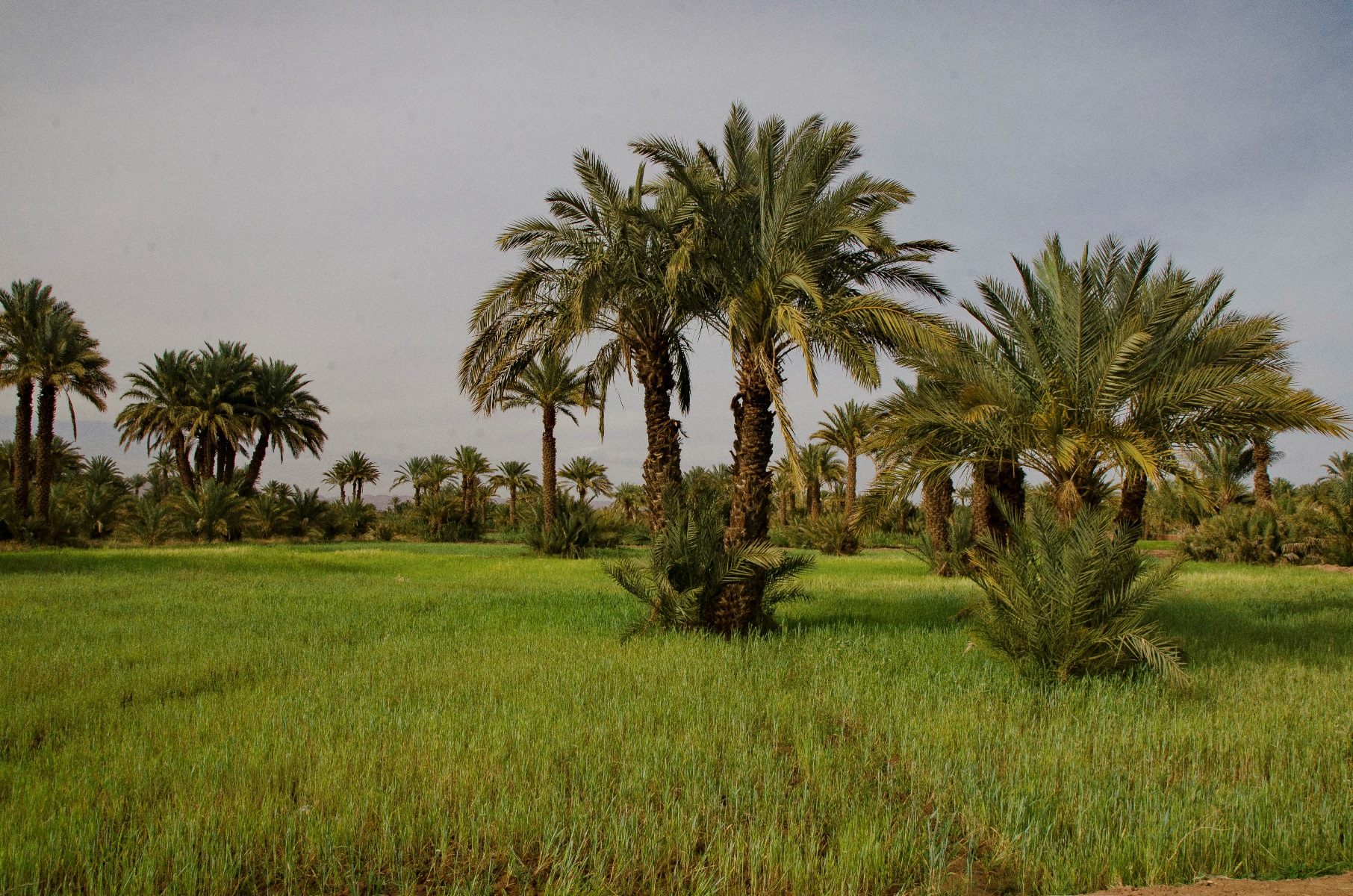 Maroko_DSC_7536