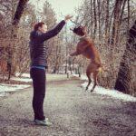 Fly high playtime germanboxer pippathedog