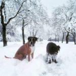 Zverine pravijo da je dober sneg    pippathedoghellip