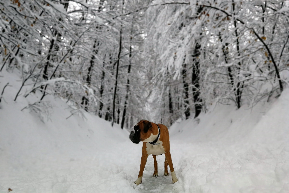 Zima zima bela