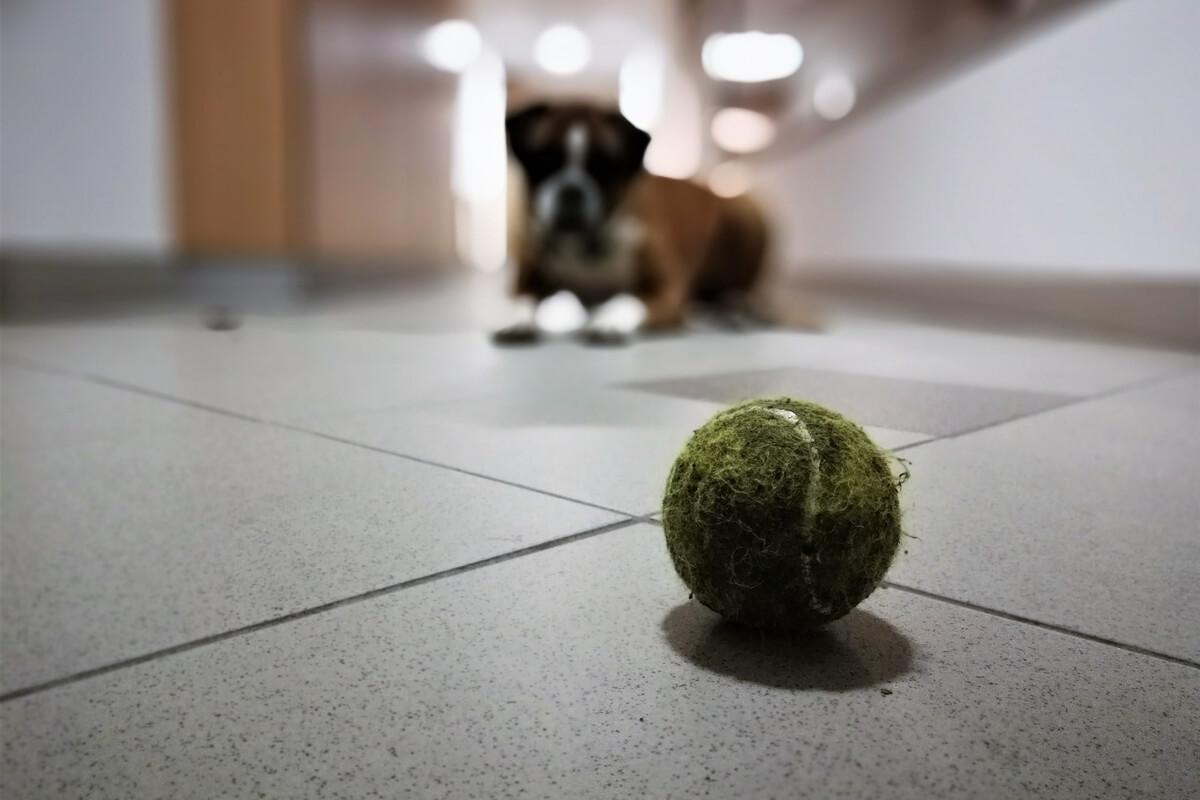 Teniška žoga