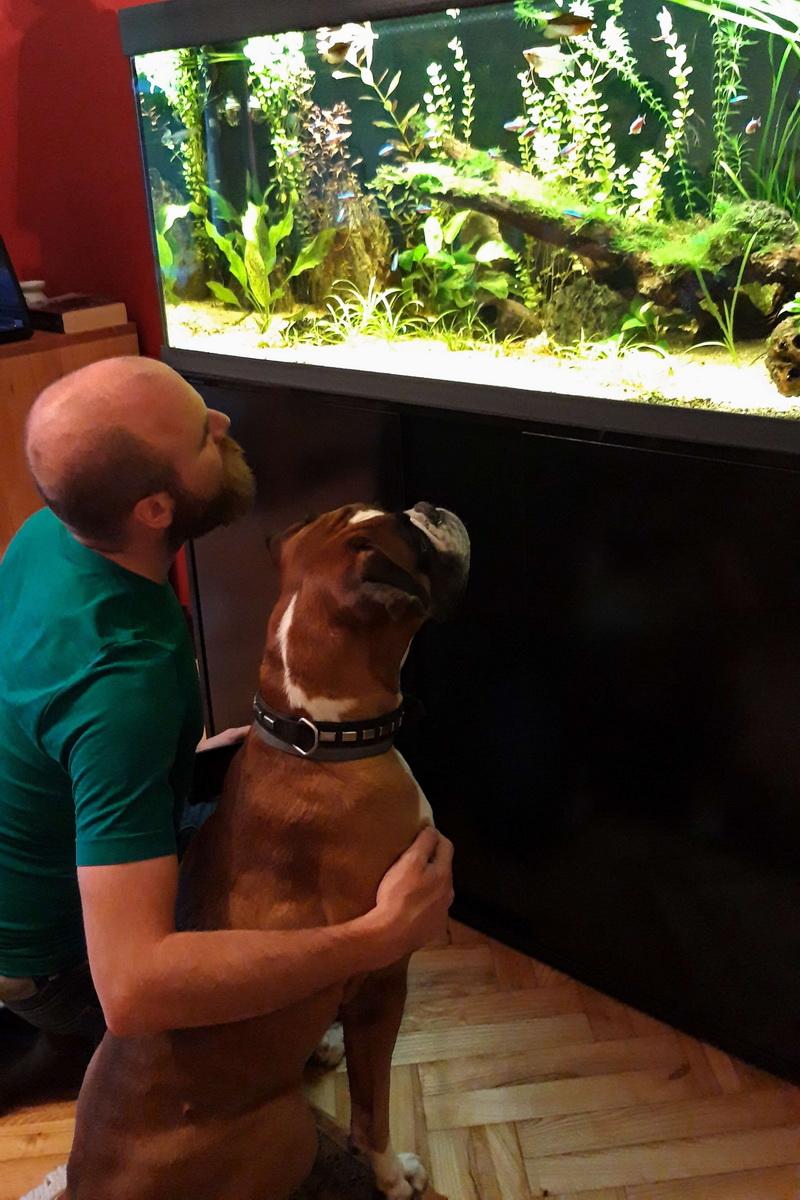 Pippa in akvarij