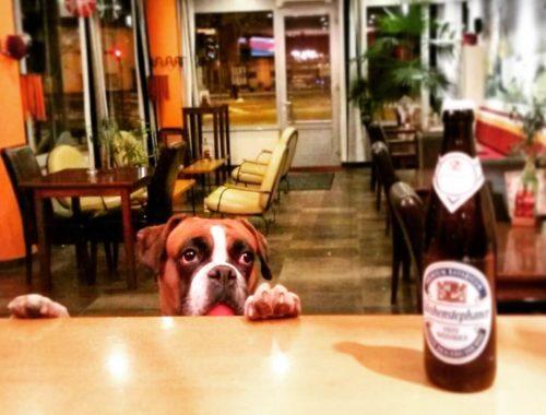 Pippa na pivu